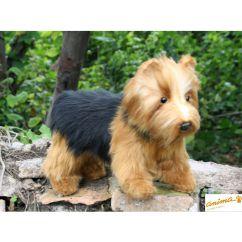 http://cadeaux-naissance-bebe.fr/2057-2523-thickbox/peluche-chien-yorkshire-terrier-30-cm.jpg