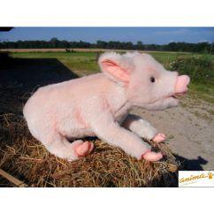 http://www.bambinweb.com/2070-2538-thickbox/peluche-cochon-couche-33-cm.jpg
