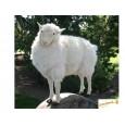 Peluche Mouton écru 100 cm