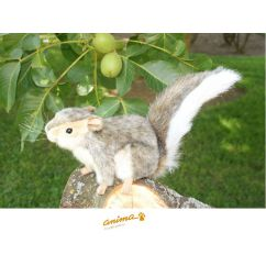 http://www.bambinweb.com/2090-2558-thickbox/peluche-ecureuil-gris-18-cm.jpg