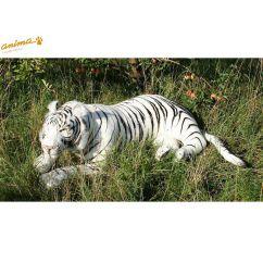 http://bambinweb.com/4369-6577-thickbox/peluche-tigre-blanc-couche-150-cm-l.jpg