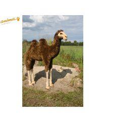 http://www.bambinweb.com/4377-6585-thickbox/peluche-chameau-geant-170-cm-h.jpg